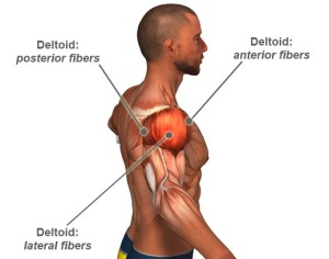 Tennis Ball Self Massage Deltoid