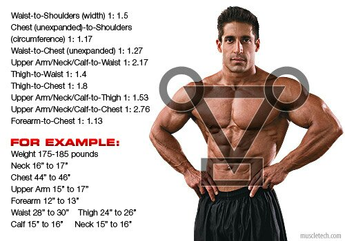 Golden Ratio In Bodybuilding Example