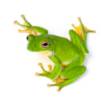 Eat That Frog – How To Build Momentum And Get Things Done Every Single Day
