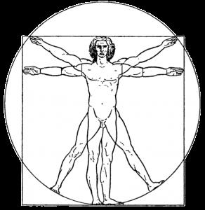 adonis-index-ratio