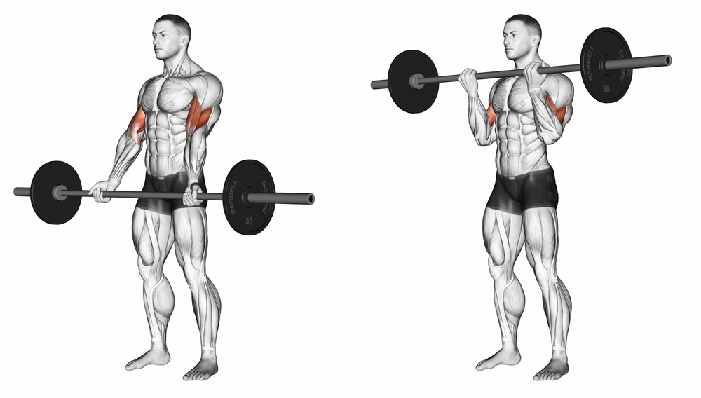Target Exercises for Thick Biceps - Fitness House
