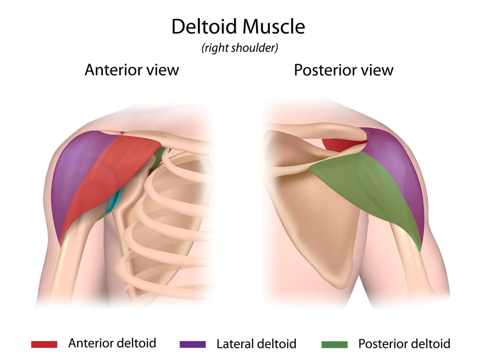 3 Effective Rear Delt Exercises To Stack On Mass Ignore Limits